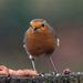 Robin (46)