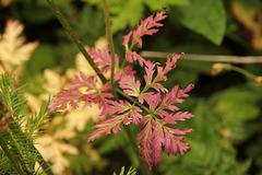 Die ersten zarten Herbstfarbtöne - Ende August in Obereggen/Südtirol