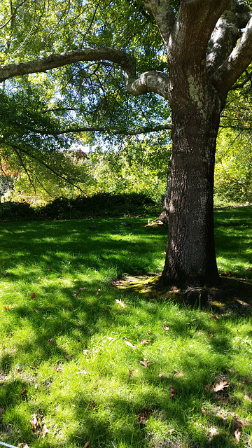 An autumn green