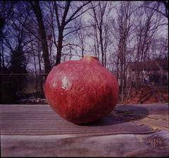 overripe pomegranate 5549