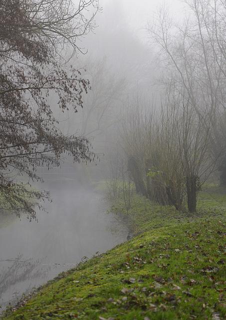 Marais des brumes