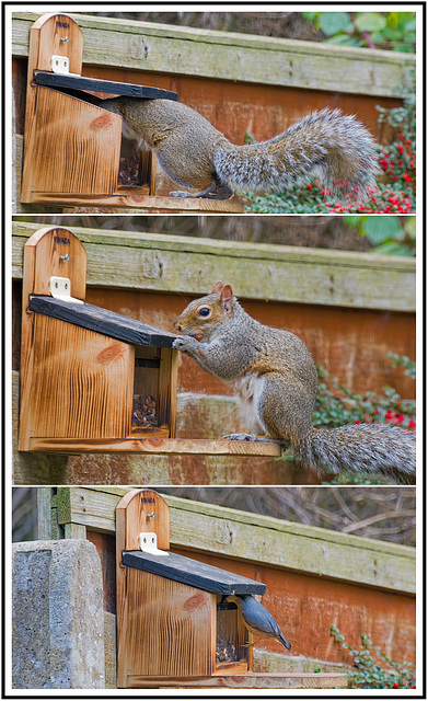 Squirrel Feeder Saga part II