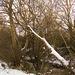 Bettws Snow 18