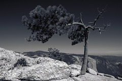 The Memory of Tree