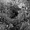 Hidden stream, Brockwell Park.