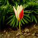 The Tulip at the Street Corner