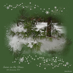 Yuletide Blessings ! ~ Snow On The Pines Jan 6th 2017