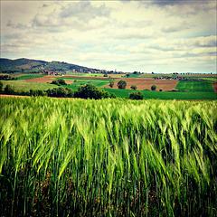 Fields in springtime.