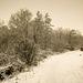 Bettws Snow 20