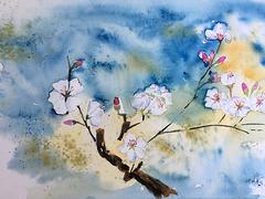 Aquarelle : fleurs d'amandier