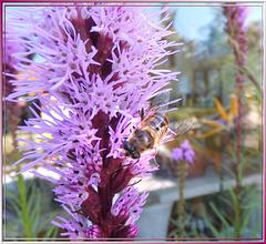 Bee Maja to visit... ©UdoSm
