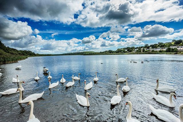 Whitegate - Cork, Ireland