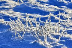 Winterimpression - (PIP)