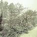Bettws Snow 25