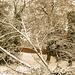 Bettws Snow 26