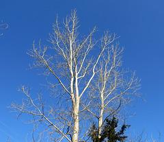 Winter contrasts