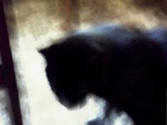 Cat coming in