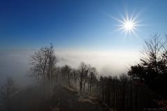 knapp über der Nebelgrenze auf dem Uetliberg (© Buelipix)