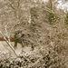 Bettws Snow 27