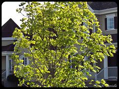 ***J'aime les arbres au printemps ***