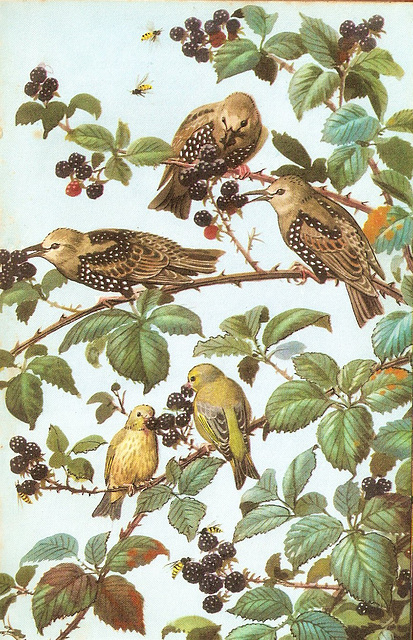Young starlings & greenfinches...