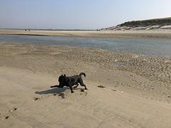 Da steckt was im Sand!!! ;-)
