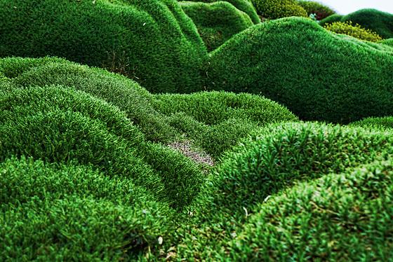 Undulating greens - Verdi ondulati