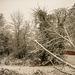 Bettws Snow 31