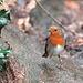 Robin at Eastham