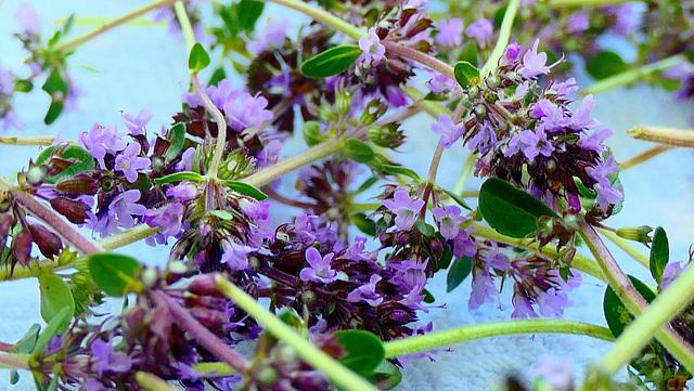 Bouquet saveur... d'Auvergne