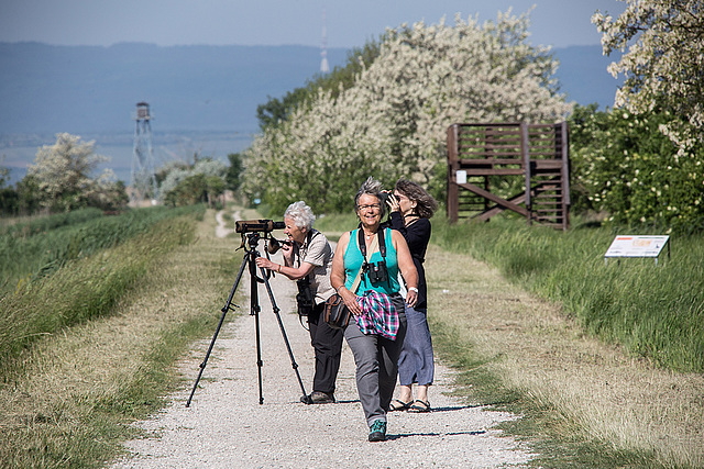 20170518 3070VRAw [A+H] Gisela, Gabi und Eva, Neusiedler See