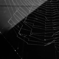 #11 a spider web