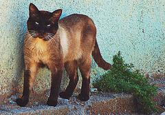 Rencontre d'un beau chat vagabond.