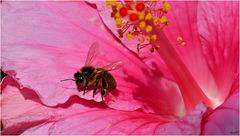 Les abeilles ...