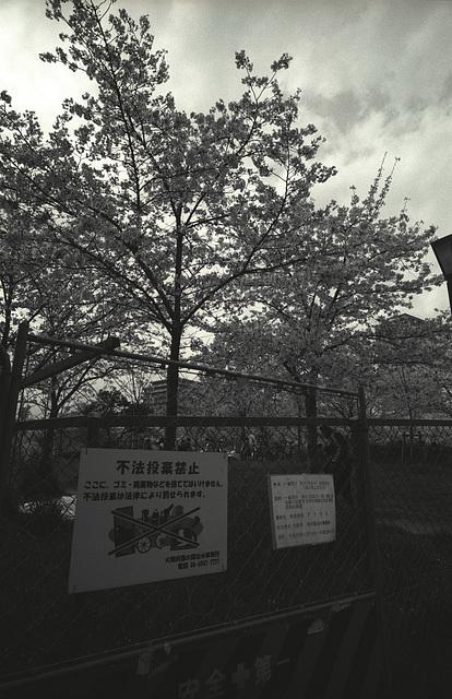 sakuranomiya-12