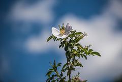 Bon dimanche fleuri ! (5 notes)