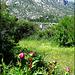 Wild peonies, monastery and  Canchos Largo, Gordo and de La Bola. H. A. N. W. E. everyone!