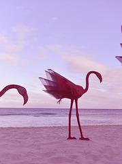the three flamingoes