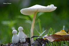 Cogumelos.
