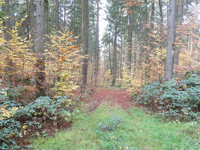 Waldgebiet Schwarzerberg