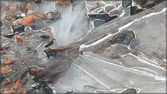 Libellule on ice