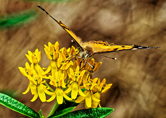 6069293 DxOdcL · Butterfly