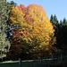 Herbst in Oberschwaben - HFF