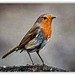Robin three