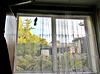Fantail on Window
