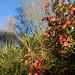 Camellia and Blue Sky