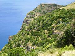 Cliff's vegetation.
