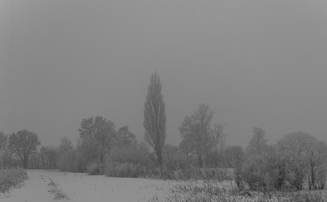 In den Wieden Naturschutzgebied in Neunkirch SH