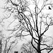 a murmur of crows