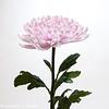 Flower 002 081017
